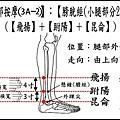 足部(3A-2)(小腿-2).jpg