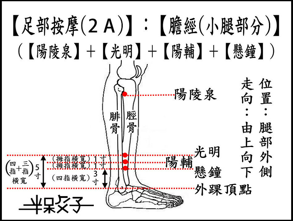 足部(2A)(小腿).jpg