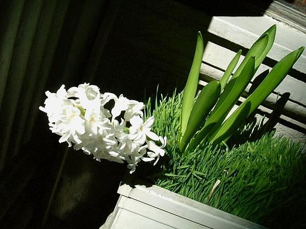 SOHO街邊的花