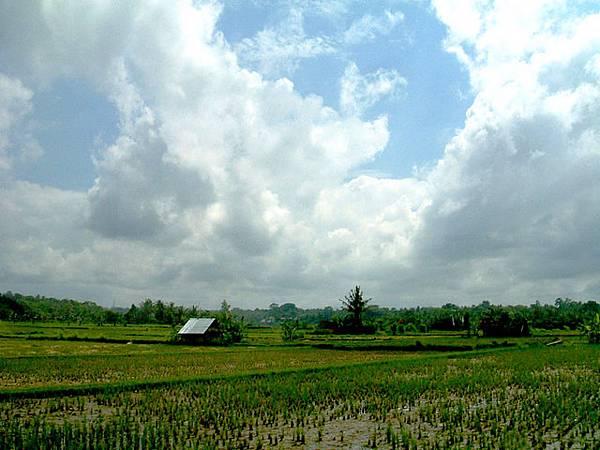 Villa外的稻田