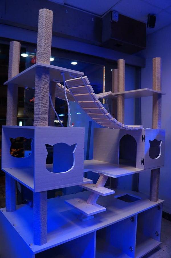 湛藍貓-貓櫃-3
