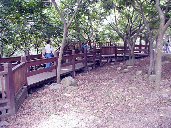 樹蔭散步道 (4)