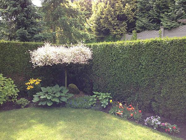Our Garden1
