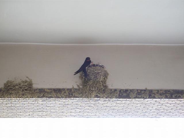 家裡的鳥巢01