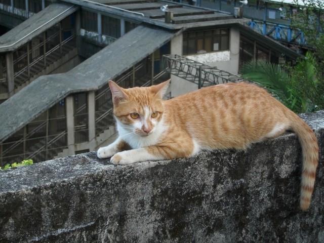北台灣二日遊051.jpg
