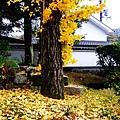 091117_h_京都南禪寺週邊_002.JPG