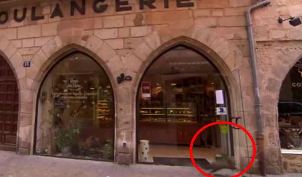 節目介紹麵包店 街貓奔過門前撞到玻璃門成意外亮點!(新聞分享)