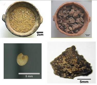 新疆發現我國最早的麵包殘留物(新聞分享)