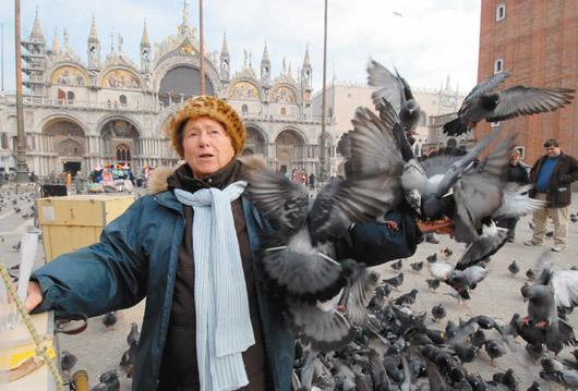 鴿污威尼斯