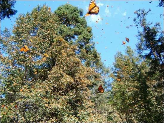 大樺斑蝶生態保護區080701