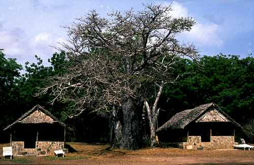 MijikendaKaya_Kenya_02.jpg