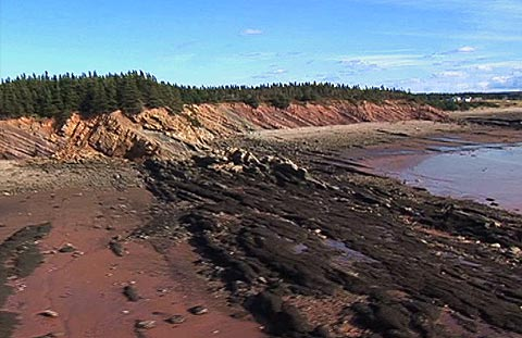 Joggins_Fossil_Cliffs_Canada_03.jpg
