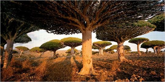 Socotra_Yemen_01.jpg