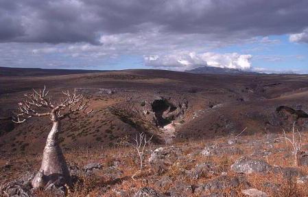 Socotra_Yemen_04.jpg
