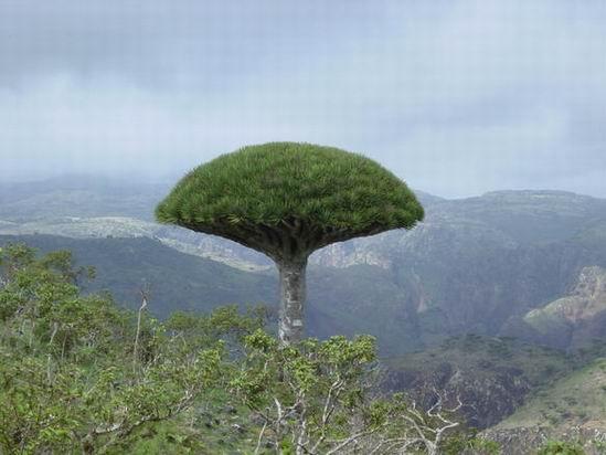 Socotra_Yemen_05.jpg