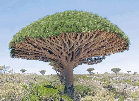 Socotra_Yemen_06.jpg