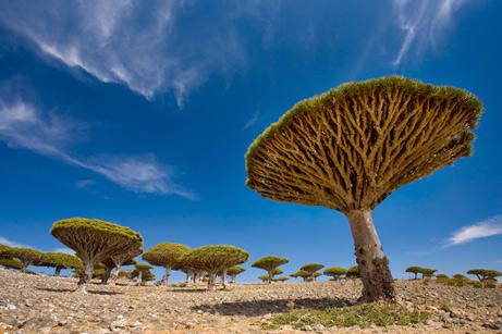 Socotra_Yemen_09.jpg