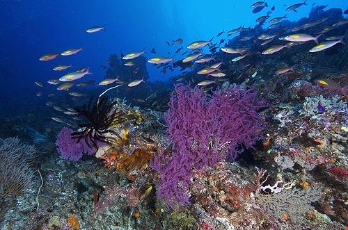 Tubbataha_Reefs_Philippines_01.jpg