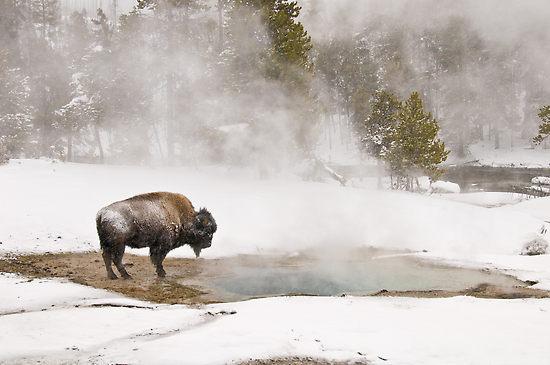Yellowstone_US_06.jpg