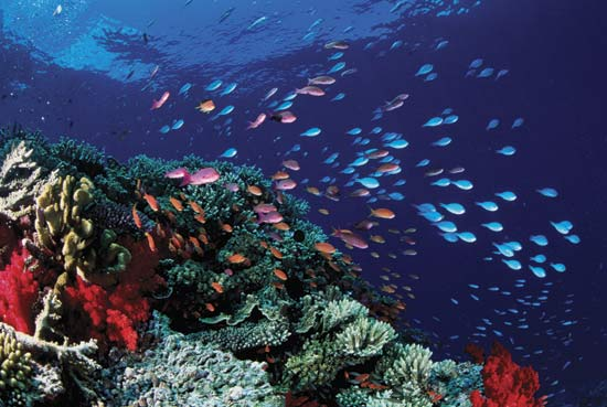 GreatBarrierReef_Australia_01.jpg