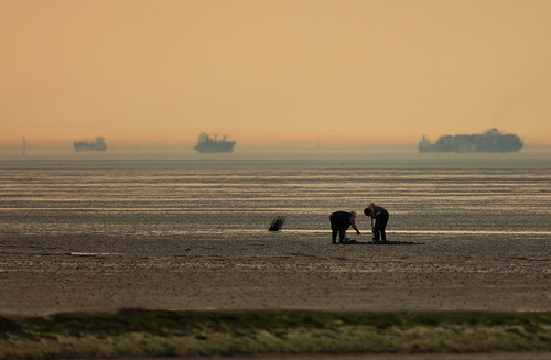 WaddenSea_Germany_Netherlands_08.jpg