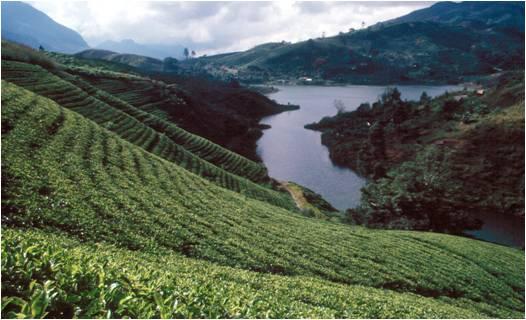 CentralHighlands_SriLanka_01.jpg