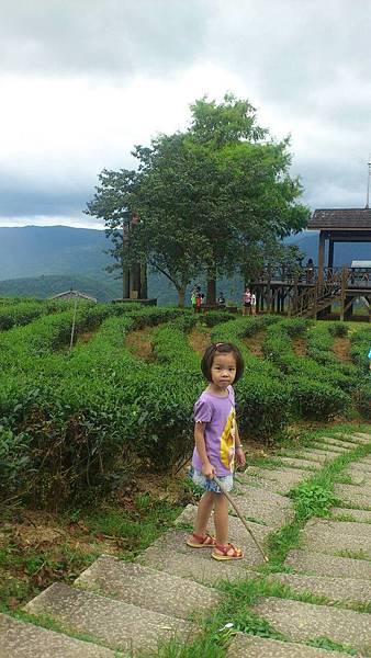 玉蘭茶園露營027