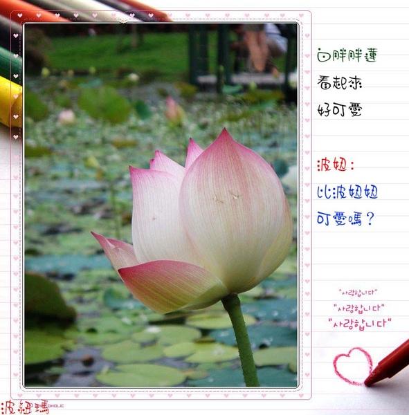 DSC02326.jpg