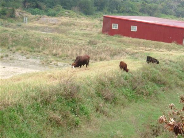 牛…那是牛
