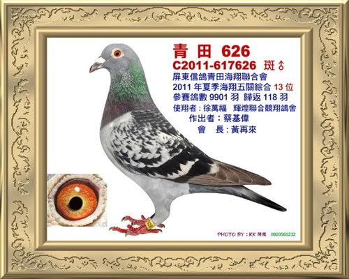 青田/100年夏季 綜合13