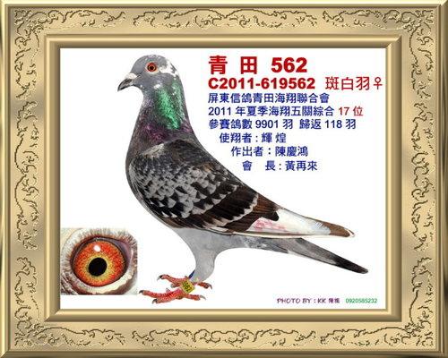青田/100年夏季 綜合17