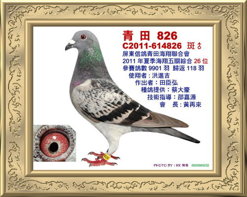 青田/100年夏季 綜合26