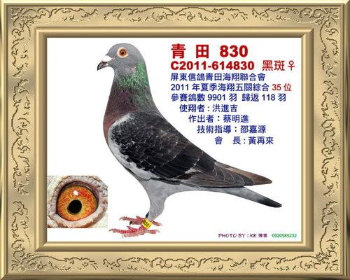 青田/100年夏季 綜合35