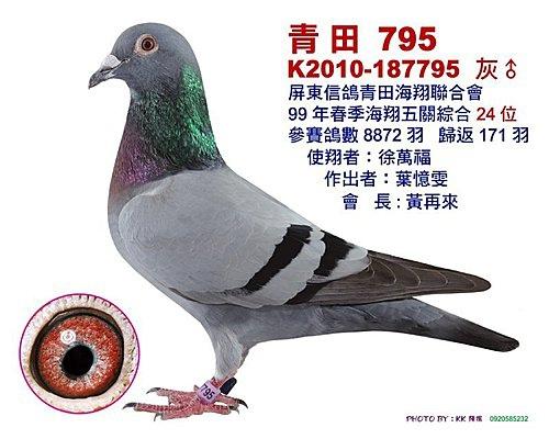 青田/99年春季 綜合24