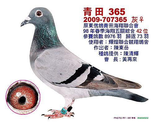 青田/98年春季 綜合42