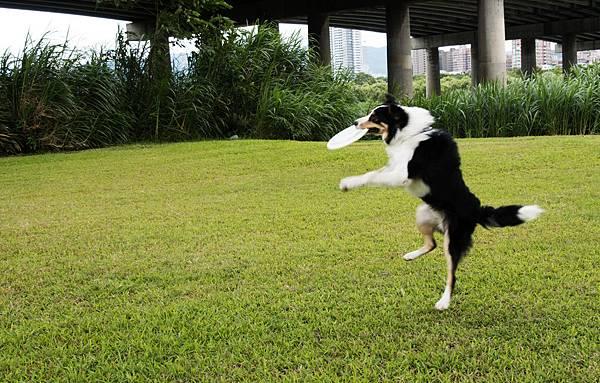 草地好大....可以依直接飛盤