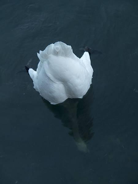 我是溺死的天鵝