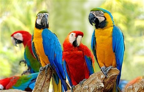 macaw_1846932c