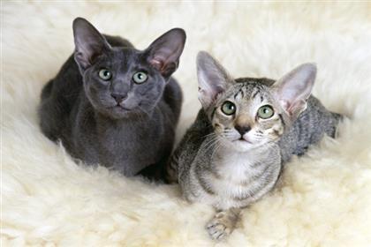 wacky-cats4_lg