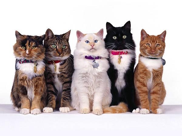 choose-a-cat_1