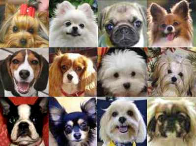 small-dog-breeds-group