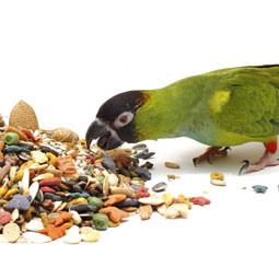bird-seed