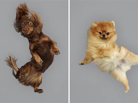 ss-141123-flying-dogs-tease_blocks_desktop_medium