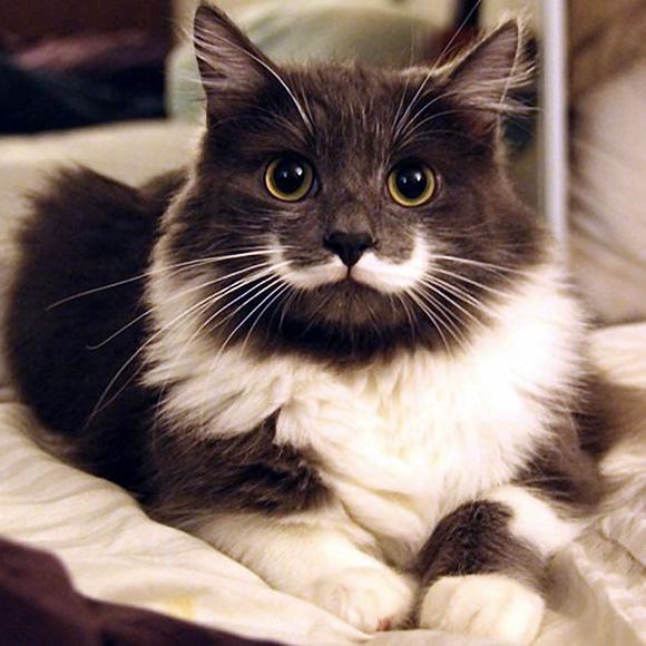 Most-Famous-Felines-034