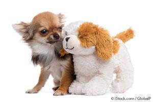dogs-emotions-jealousy