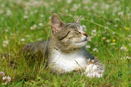 cat_summer