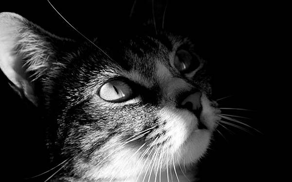 dark_cat_view-animal-wallpaper