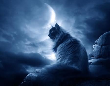 dark-cat-and-the-moon-graphic