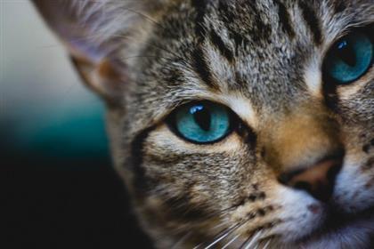 catvision_eyecolor_lg
