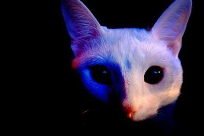 catvision_ultraviolet_lg